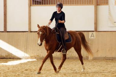 Pferd im Gleichgewicht