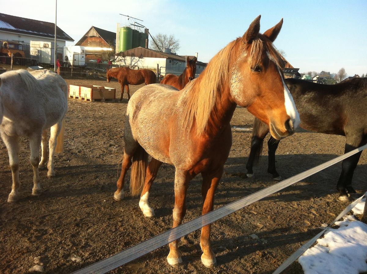 Pferde-Wellness Schlammbad