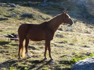 Sonnenbad Pferd Berge